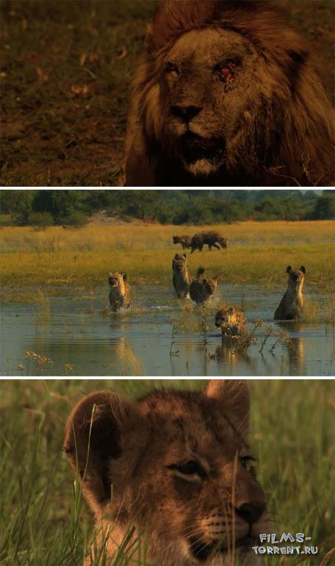 Жизнь львов скачать торрент