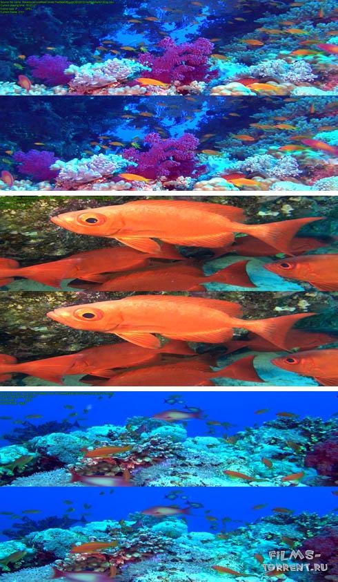 Приключение у кораллового рифа: Подводная жизнь Египта