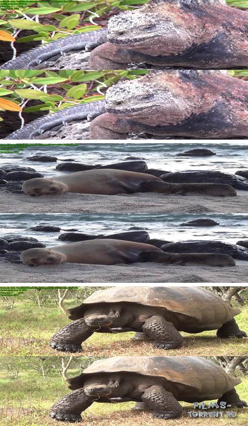 Галапагосские острова 3D