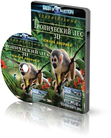 Очарование тропического леса 3D