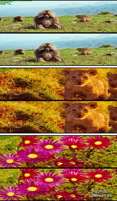 Заколдованное Королевство 3Д (2013)