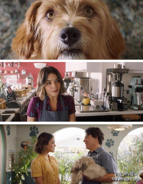 Собачьи дни (2018)