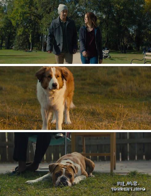 Собачья жизнь 2 (2019)
